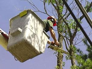 Tree Pruning for Homeowners